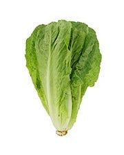 Fresh Romaine Lettuce - Unit