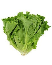 Fresh Greenleaf Lettuce
