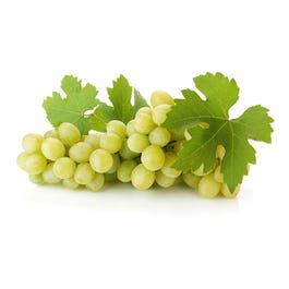 Fresh Seedless Extra Large Green Grapes - 2 Lbs (CASE)