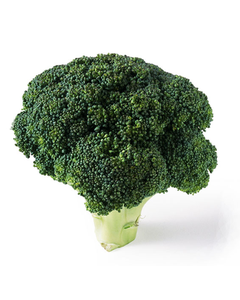 Fresh Broccoli - 14 Cnt
