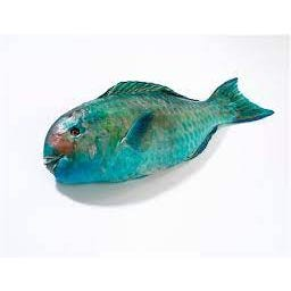 Netuno Parrot Fish, Whole - 10 Lb