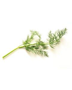 Dill Herb - 1Lb
