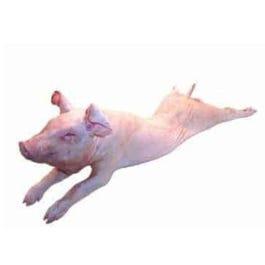 Frozen Pig Suckling 50-60 lbs (average) (Pound)
