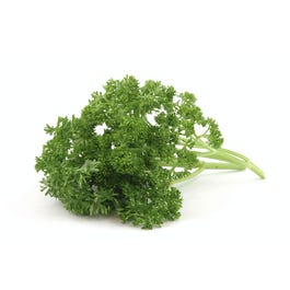 Curley Parsley  - 60 Cnt
